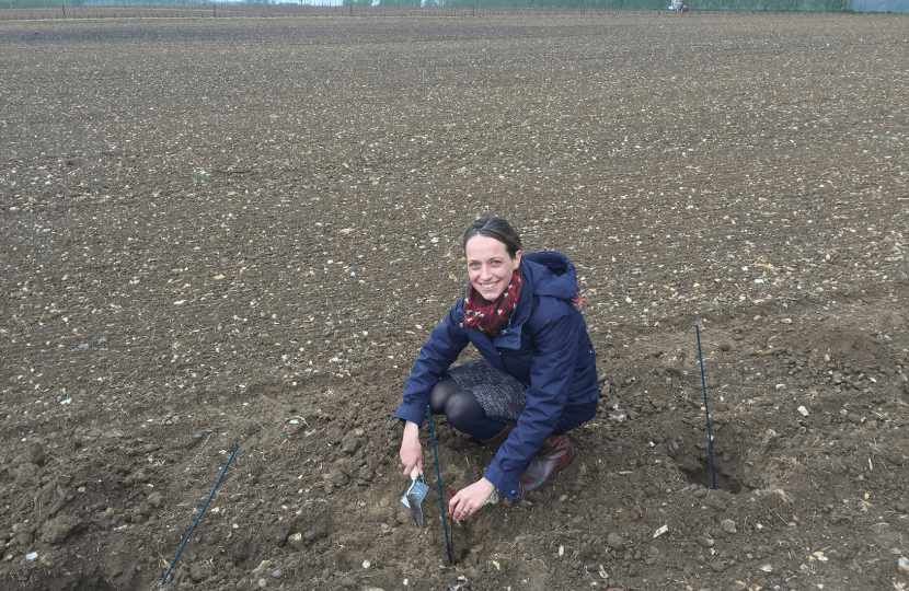 Planting a Domaine Evremond vine in Selling