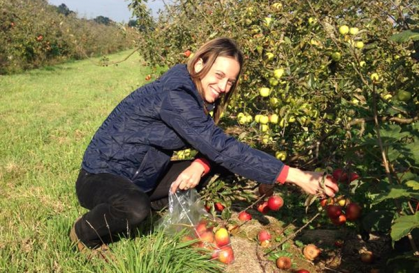 Helen Whately picking fruit